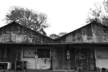 Corrugated Building, Naalehu, Hawaii