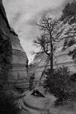 Leaning Tree, Kasha-Katuwe Tent Rocks National Monument